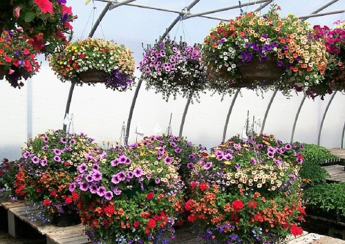 Hanging Baskets Product